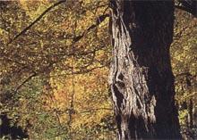 wood_pro_naturholz.jpg